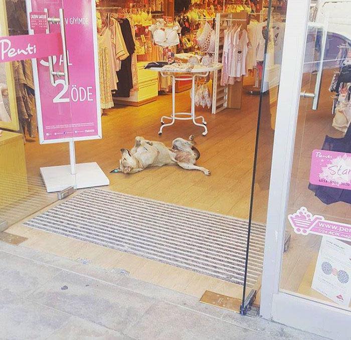 Владельцы магазинов запускают бездомных собак погреться в помещении.