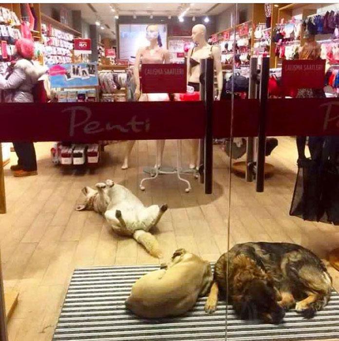 Бездомные собаки за закрытыми дверьми одного из магазинов Стамбула.