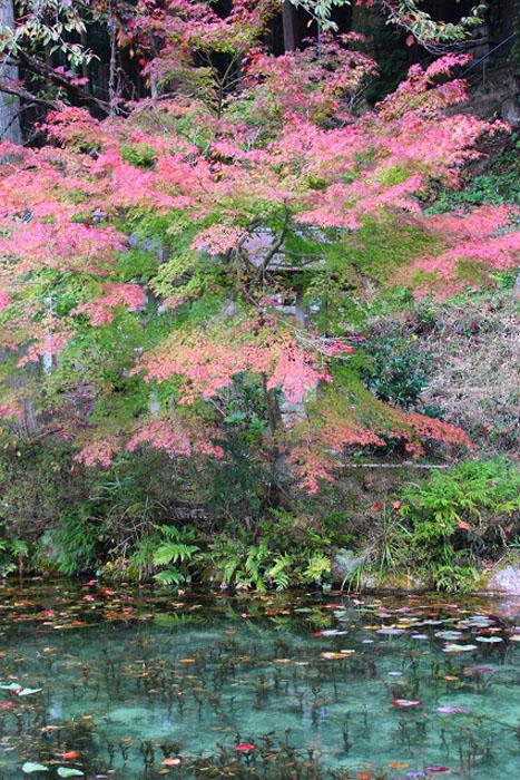 Осень в префектуре Гифу.