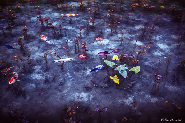 Осенний пруд. Фото:  Hidenobu Suzuki.