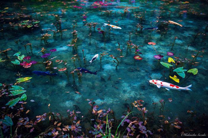 Безымянный пруд в горах Японии.  Фото:  Hidenobu Suzuki.