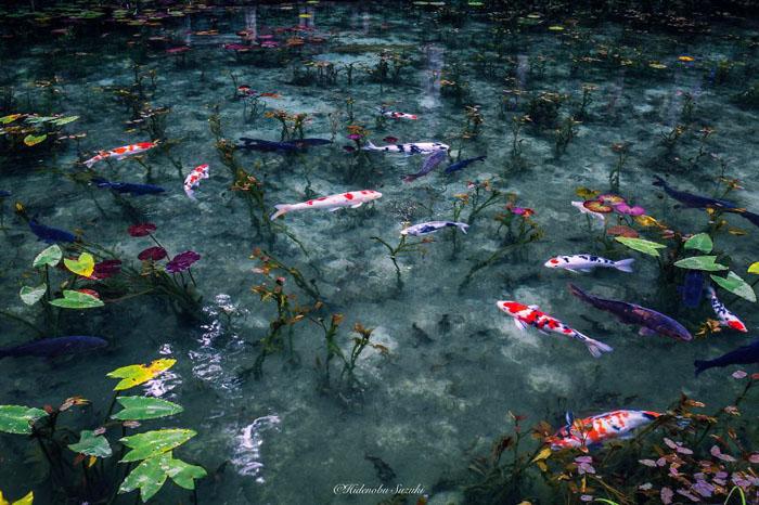 Невероятно красивый пруд в Японии.