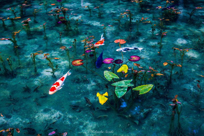 Необычный пруд, напоминающий картины Моне.  Фото:  Hidenobu Suzuki.