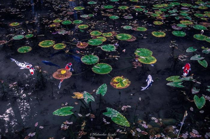 Безымянный пруд в префектуре Гифу.  Фото:  Hidenobu Suzuki.