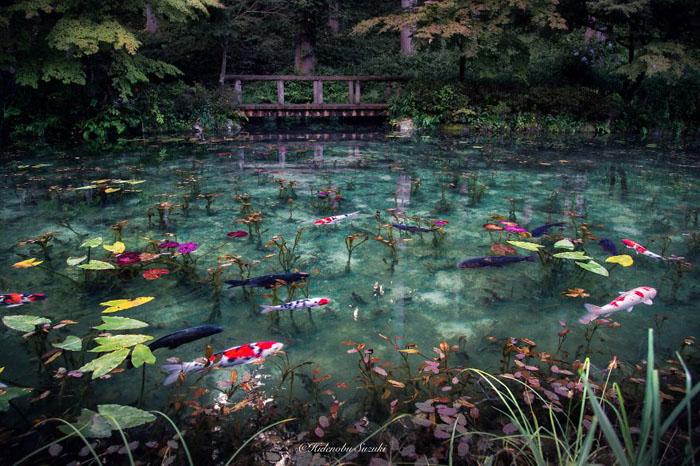 Пруд Моне в Японии.  Фото:  Hidenobu Suzuki.