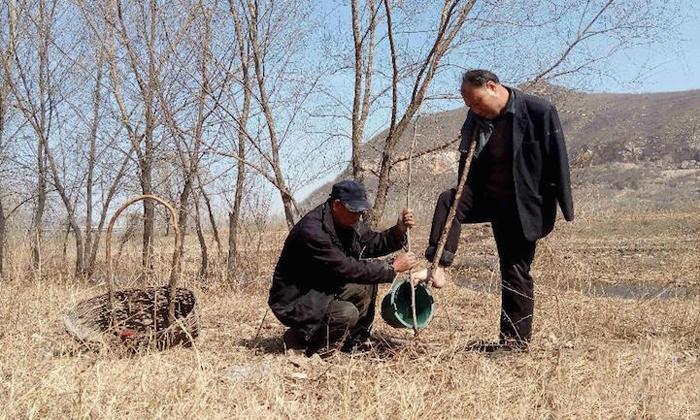 Каждый день друзья сажают деревья.
