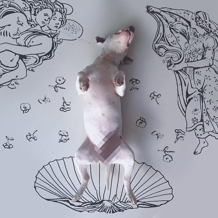Венера Ботичелли - собачья версия.