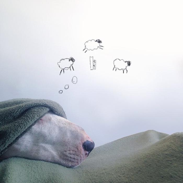 Сладкие сны для милого пса.