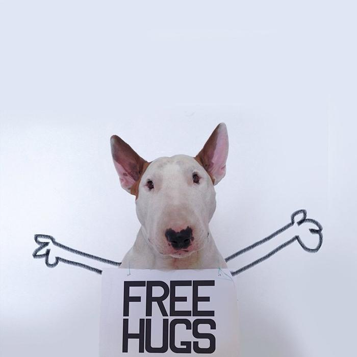 Обнимашки! - дружелюбный пёс в объективе своего хозяина.