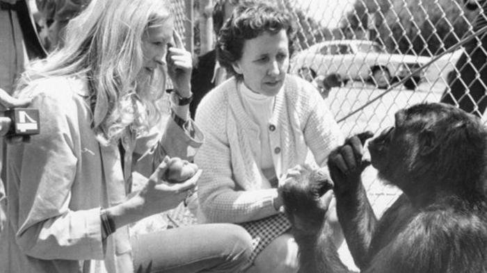 Фрэнсис Паттерсон начала заниматься с Коко, когда той был всего год от рождения.