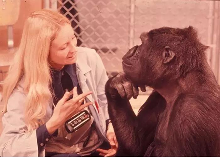 Коко знала около 1 000 слов на языке жестов.