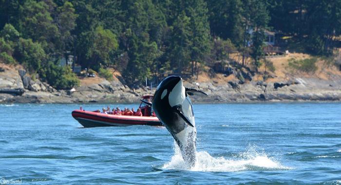 Джей-ту в прошлом году у берегов Канады. Фото: Gary Sutton.