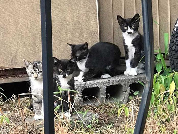 Котенок был замечен вместе со своими братьями и сестрами.