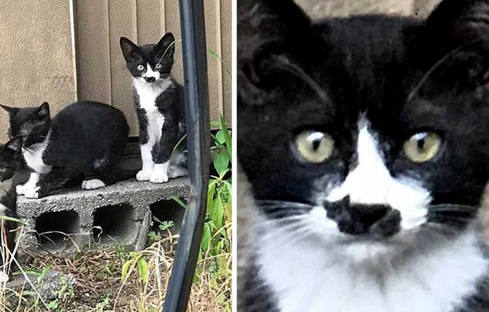 Удивительный окрас японского котенка.