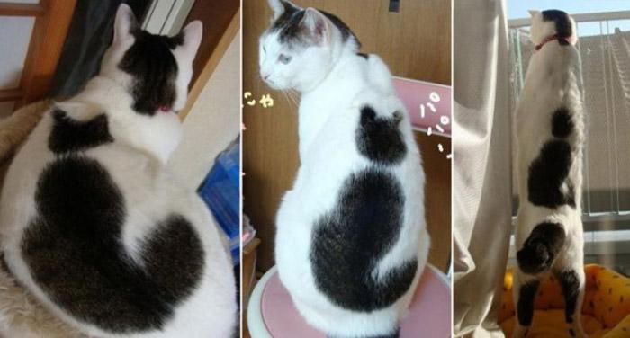 Окрас в виде силуэта кота.