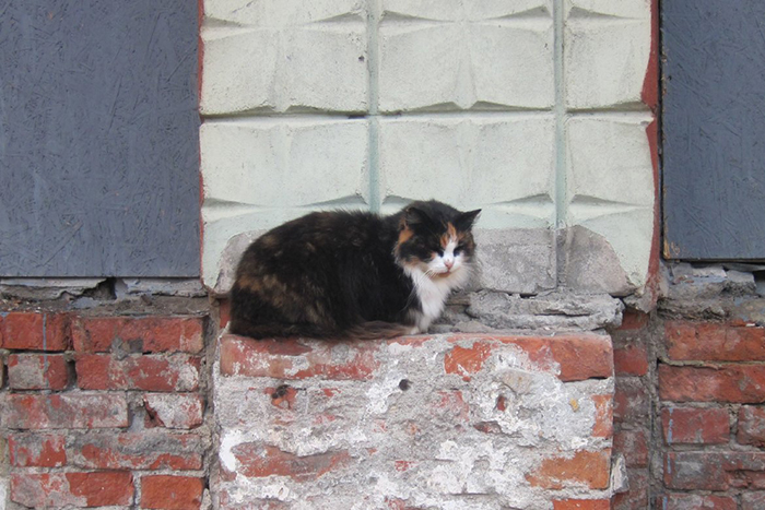 Коты Зеленогорска теперь на особом счету.