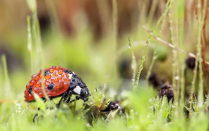 Мир насекомых на фотографиях Томаша Шкочена.
