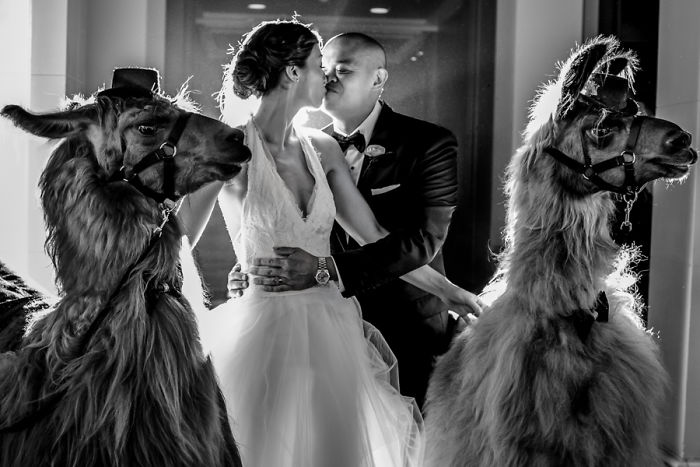 Свадебная фотография.