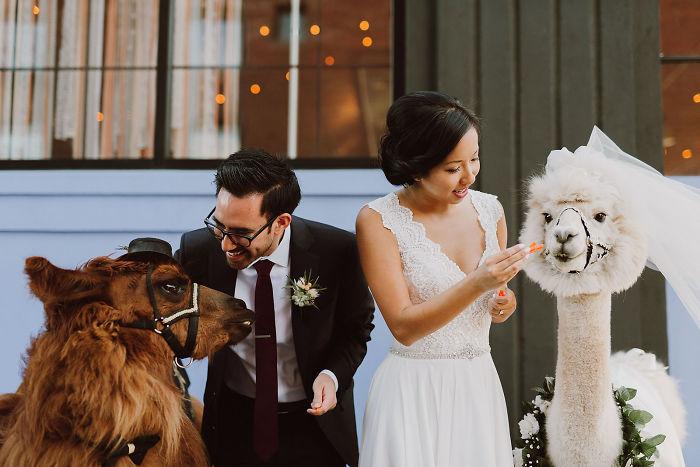 Эксклюзивные свадебные фотографии.