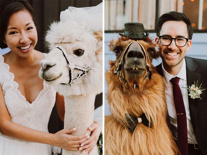 Портреты с ламами.