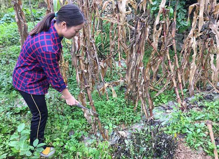 Лили Тан работает в поле.