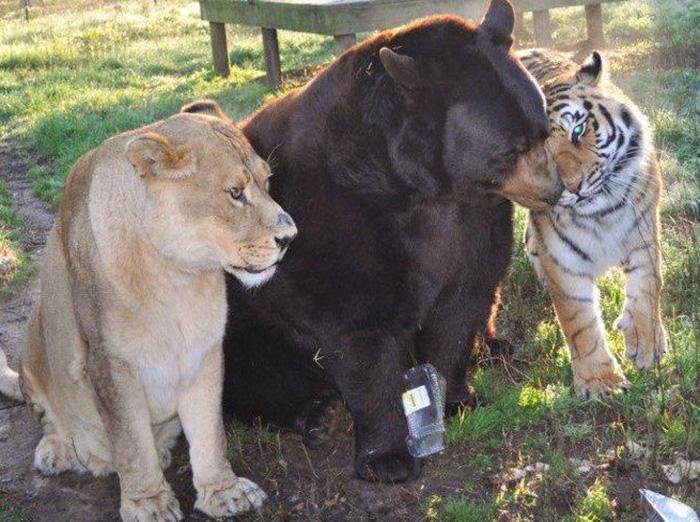 Животные родом с разных континентов, и встретиться на воле у них не было ни единого шанса.