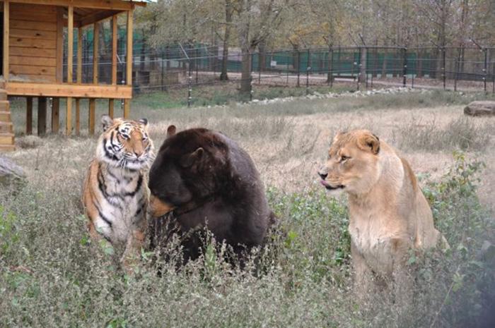 Несмотря на различия, животные живут, как одна семья.