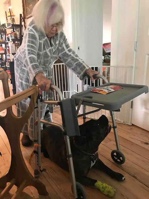 Конфетка оказалась единственной собакой, которая так сильно беспокоится о бабушке.