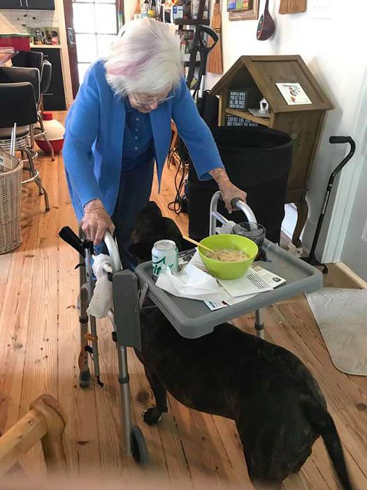 Конфетка всегда сопровождает бабушку, когда та куда-либо идет.