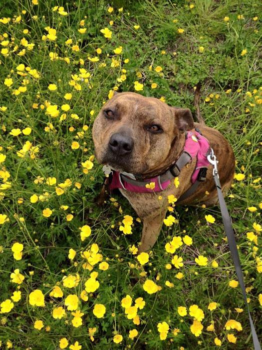 Собака, прожившая шесть лет в приюте.