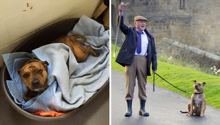Фрейя, *самая одинокая собака в мире*, нашла свой дом и звездную работу.