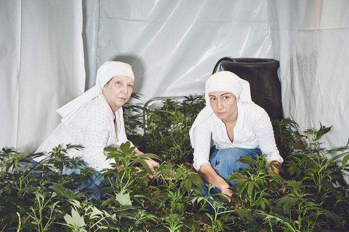 Сестры из Долины, выращивающие медицинскую коноплю.