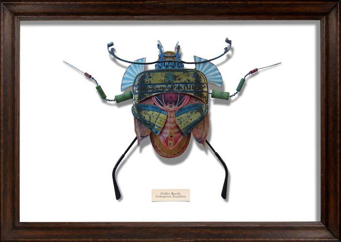 Потрясающие жуки из коллекции Марка Оливера.