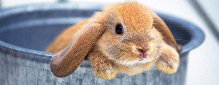 Мэри убедила всех окружающих, что родила кроликов потому что постоянно о них думала.