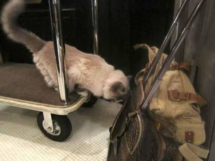 Досмотр багажа.