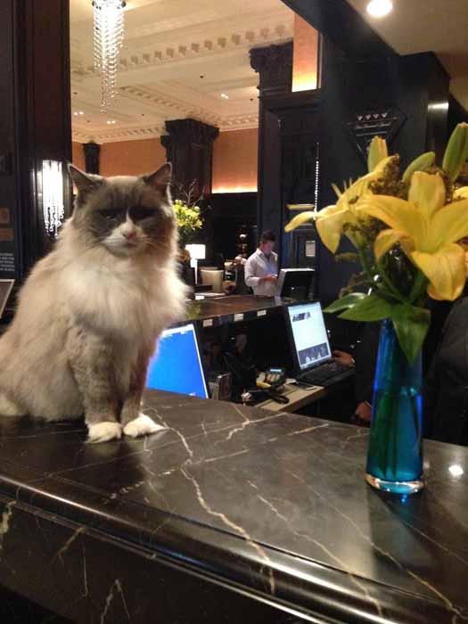 Каждое утро Матильда встречает гостей отеля.