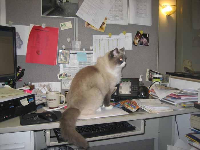 Матильда на работе.