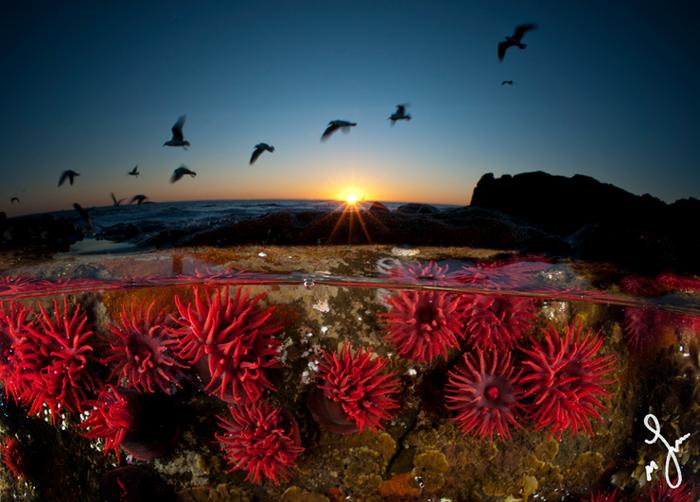 Параллельная Вселенная: Окна сквозь Волны.  Фото: Matthew Smith.