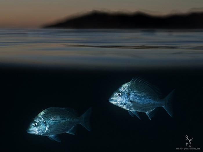Ночная фотосъемка у берегов Австралии.
