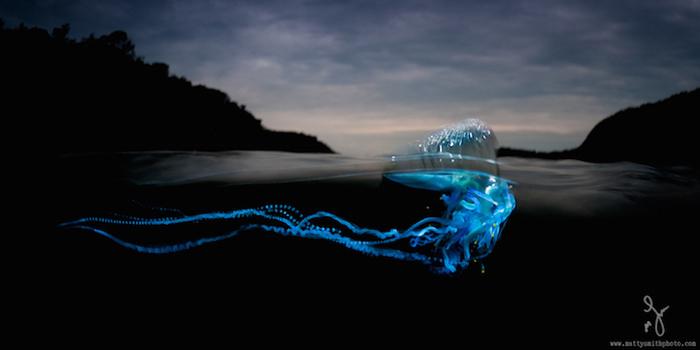 Подводная жизнь на фотографиях Мэтью Смита.