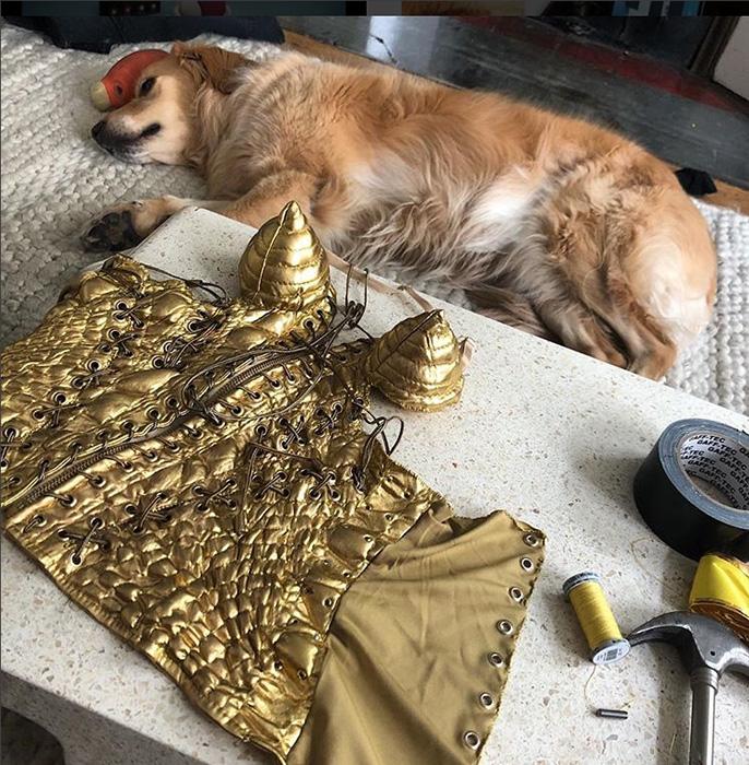 Венсан самостоятельно шил все костюмы для своей собаки.
