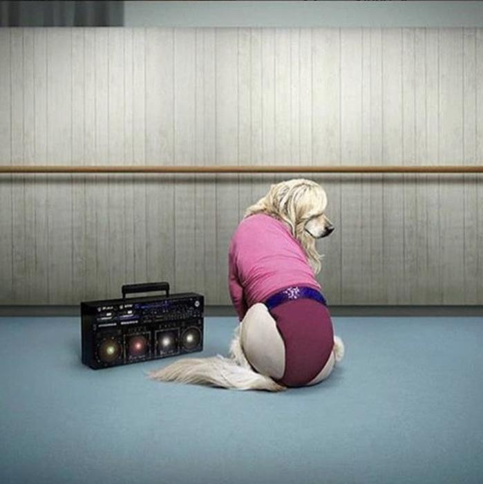 Ретривер в розовом трико, в каком Мадонна снималась для клипа *Hung Up*.