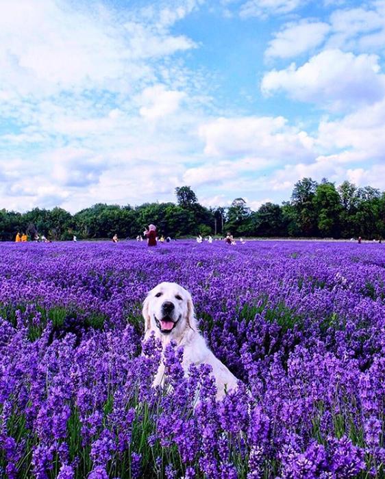 Фотосессия собаки.