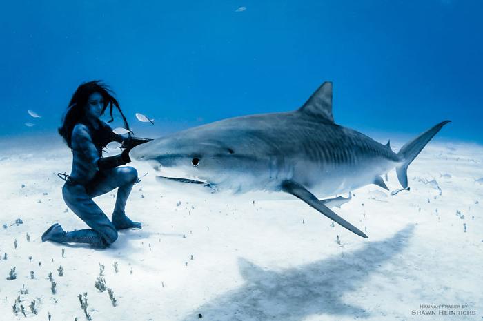 Момент из шоу с акулой. Фотограф Shawn Heinrichs.