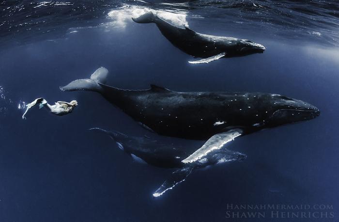 Наравне с китами. Фотограф Shawn Heinrichs.