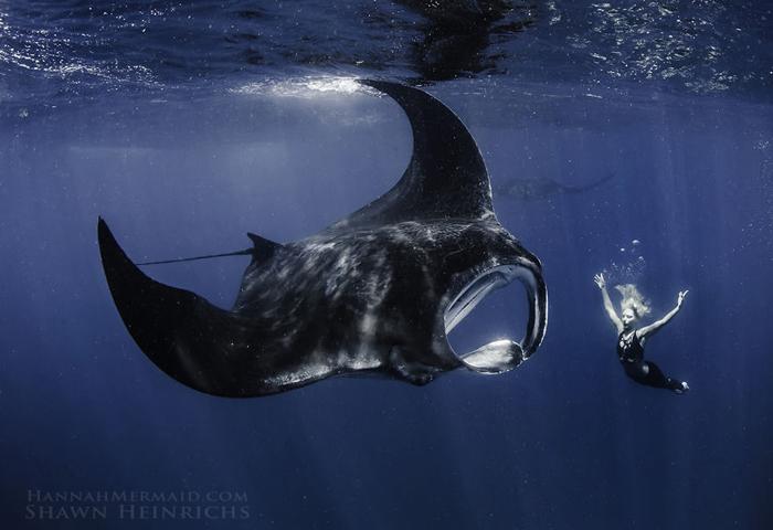 Подводный мир. Фотограф Shawn Heinrichs.