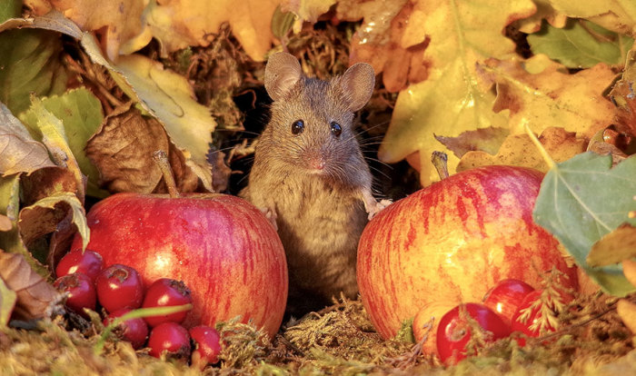 Саймон радуется, что мышки с удовольствием позируют на камеру.