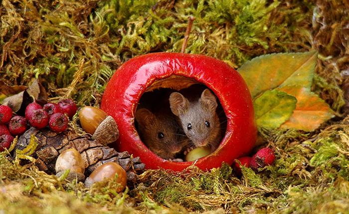 Мышки охотно позируют на камеру.