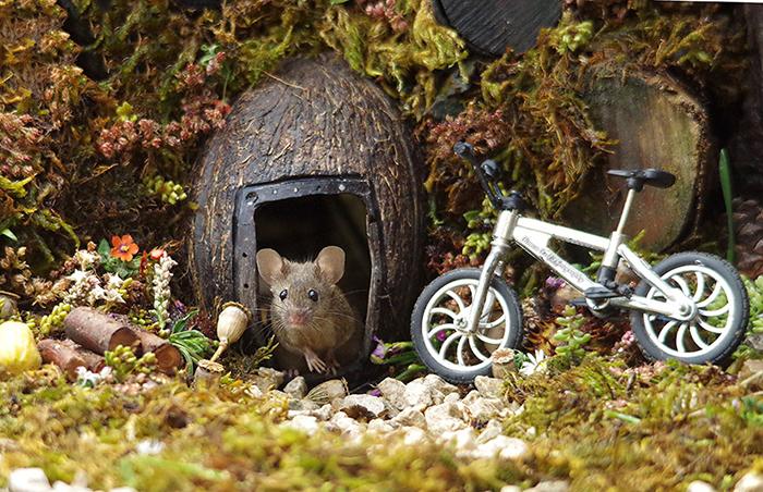 Саймон устраивал мышкам регулярные фотосессии.