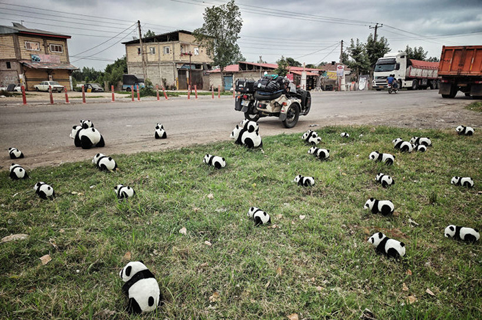 Нашествие панд на улицах Ирана. Instagram bizoo_n.